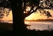 Sunrise on the Wa...