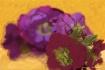 painted purple fl...