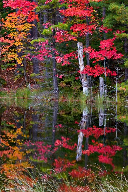 Reflection Design  - ID: 9996070 © Jacqueline A. Tilles