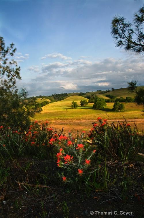 Road Side Wild Flowers - ID: 9999774 © Thomas C. Geyer
