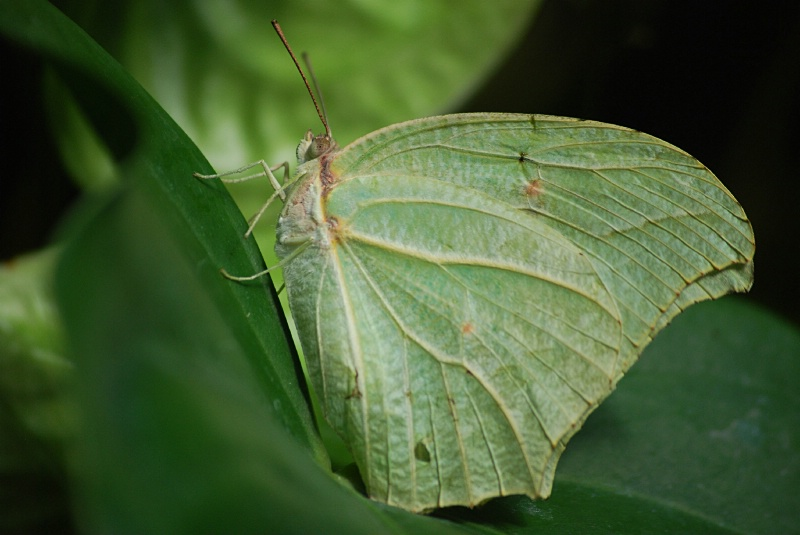 Leaf Alive