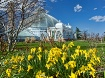 Springtime in Buf...