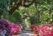 Southern Plantati...