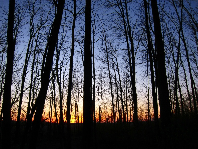The wood at sunset