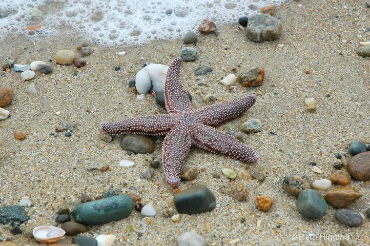 """""""Starfish II""""    MV 128 - ID: 10028949 © Beth E. Higgins"""