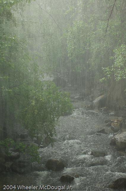 Rain - ID: 10050685 © Wheeler McDougal Jr.