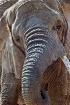 Ruth the Elephant