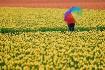 In Rainbows II