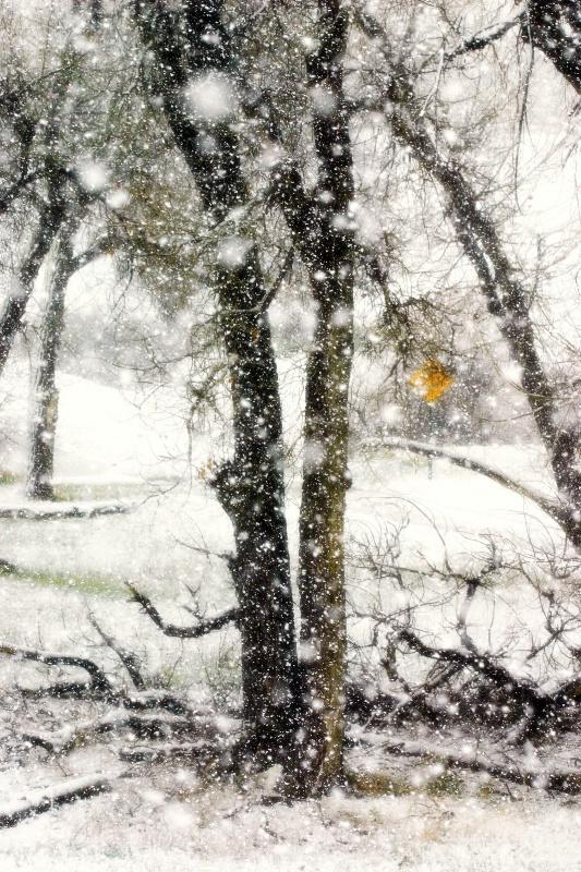 A Wild Spring Snowstorm,  Denver
