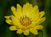 TX Wild Flower #1