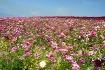 The flower fields...