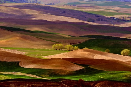 Springtime On The Palouse