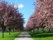 Spring Color Guar...