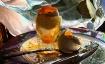 Solar- Dippy Eggs...