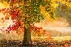 Autumn Liquid Amb...