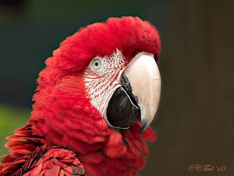 Natural Redhead