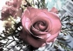 MY VICTORIAN ROSE