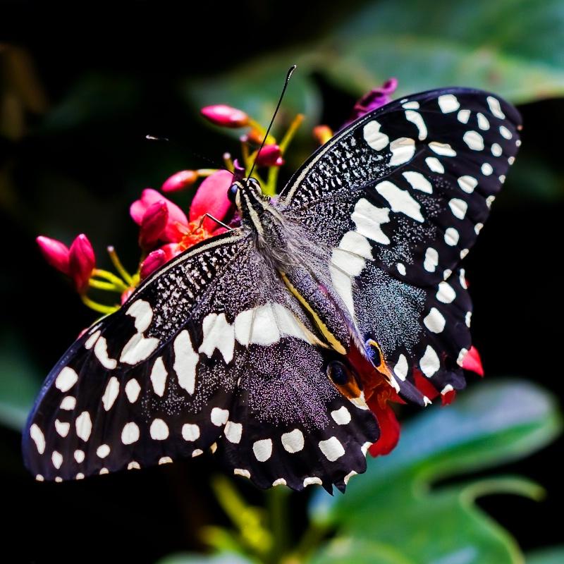 Black Beauty - ID: 10139833 © Michael Kelly