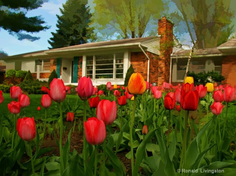 Tulip Trails - ID: 10150589 © Ron Livingston