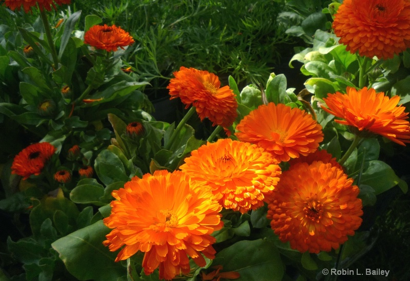 """""""The Flower Pot""""..."""