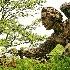 © John R. Grede PhotoID # 10159133: garden statue