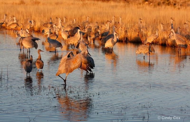 cranes in morning light  - ID: 10166750 © Cynthia S. Cox