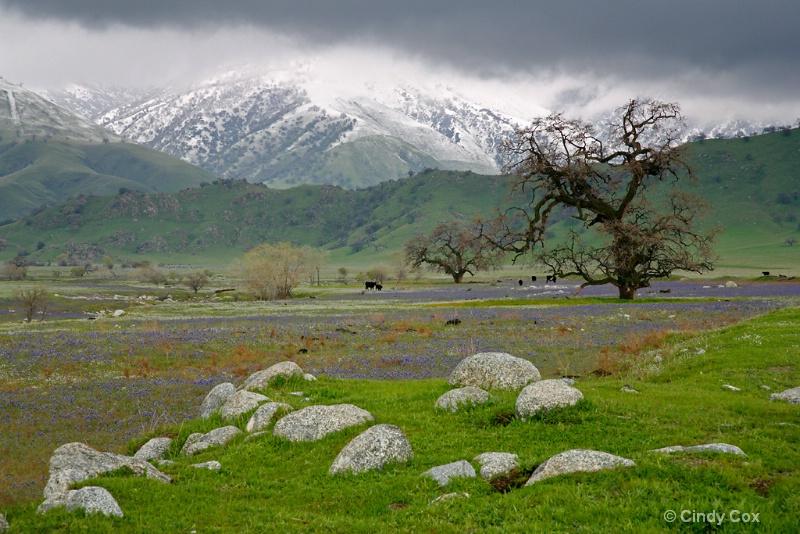 tejon ranch landscape  0943 - ID: 10166767 © Cynthia S. Cox