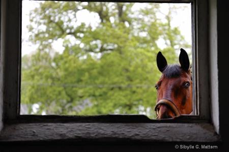 a curious onlooker