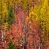 © Eric Reese PhotoID# 10178590: autumn-trees