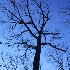 © Sue P. Stendebach PhotoID # 10184168: Standing Tall, Arlington, VA
