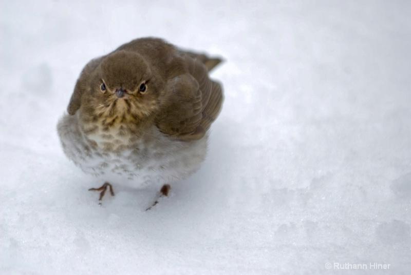 dazed bird