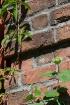 Brick & Vine