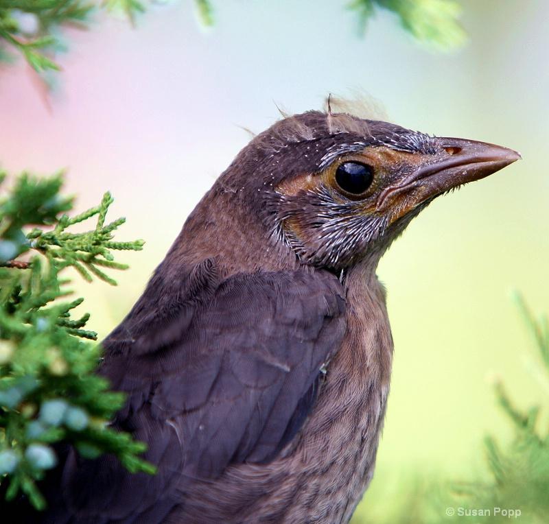 Baby bird - ID: 10242890 © Susan Popp