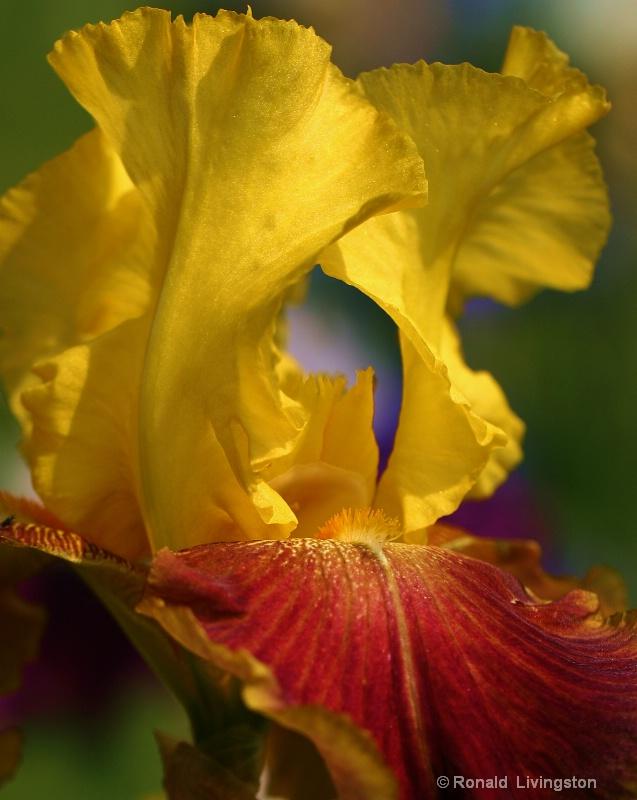 Morning Bliss  - ID: 10245460 © Ron Livingston
