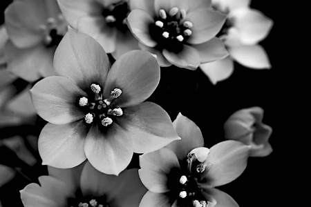 ~THE BEAUTY IN BLACK AND WHITE~