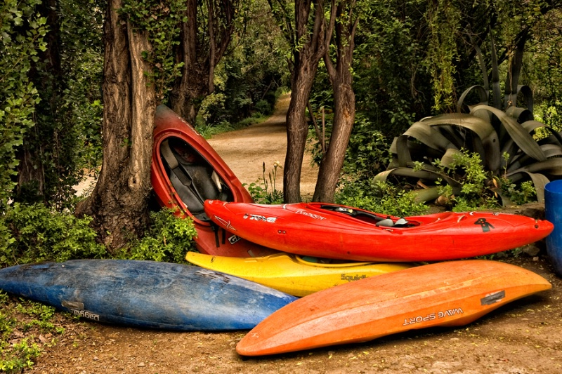 Kayak Forest