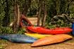 Kayak Forest