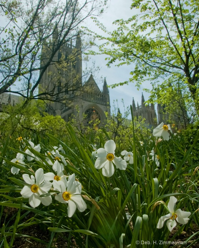 Narcissus and the Cathedral - ID: 10274687 © Deborah H. Zimmerman