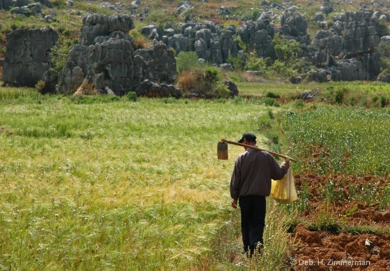 Heading home from the fields at the Stone Forest - ID: 10281818 © Deborah H. Zimmerman