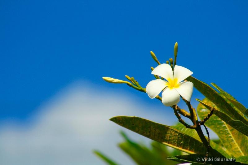 Blue Hawaii - ID: 10282821 © Vicki Gilbreath