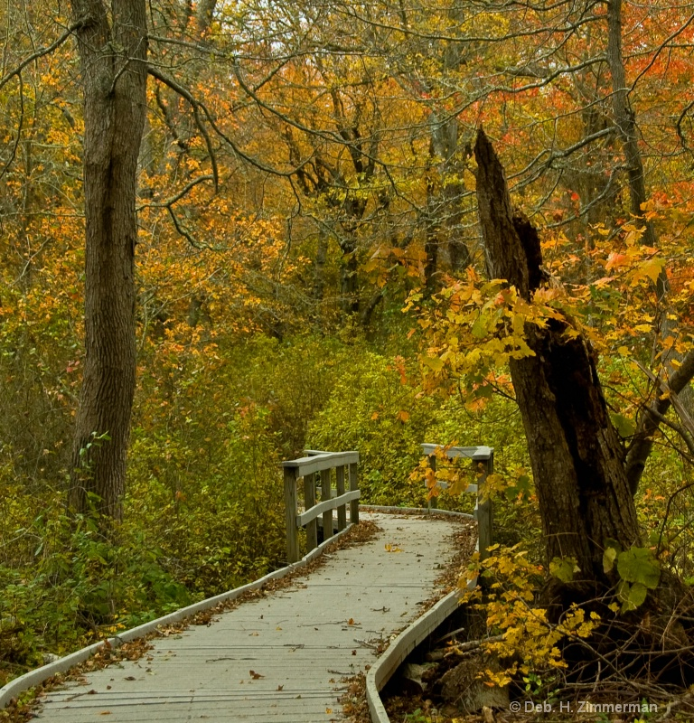 Landmark in the Red Maple Swamp  - ID: 10283021 © Deborah H. Zimmerman