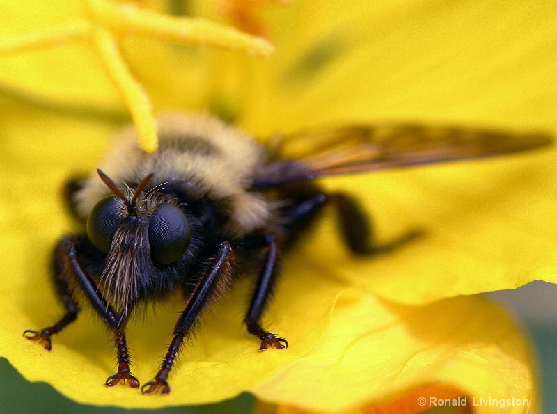 Bee's Knees - ID: 10289482 © Ron Livingston