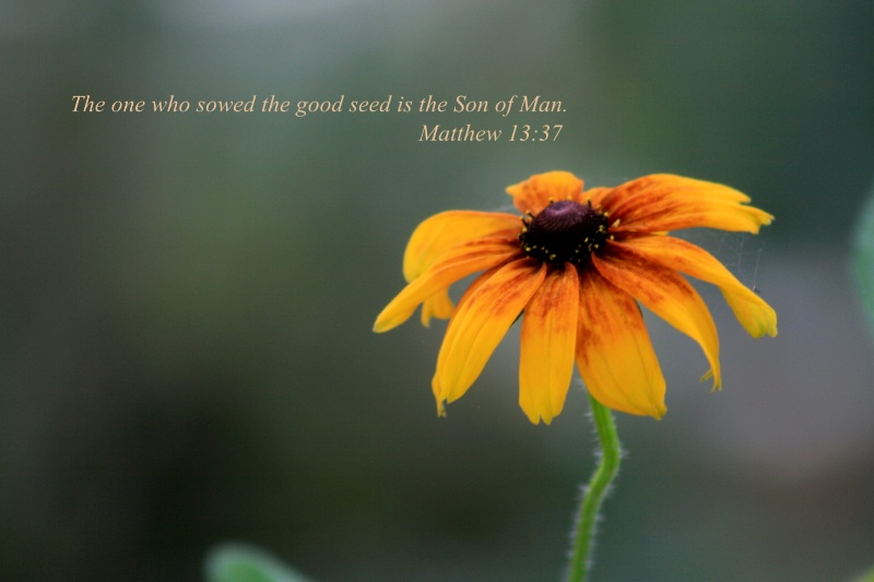 Good Seed - ID: 10290600 © Vicki Gilbreath