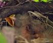 bird-baby day2-p5...