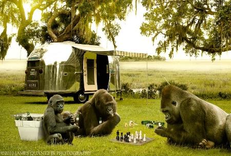 "Airstreamin' Apes - ""Boy's Club"""