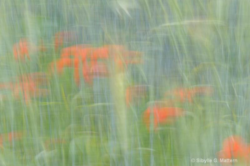 poppy field - ID: 10334177 © Sibylle G. Mattern
