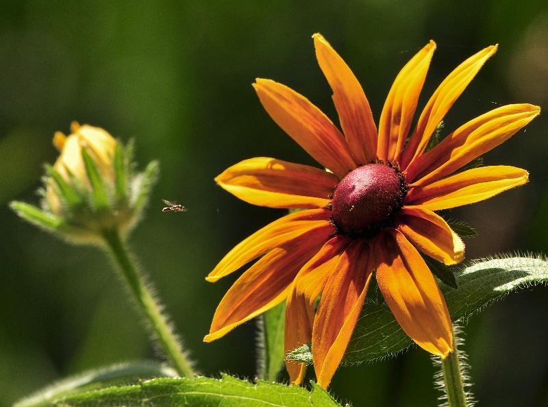 Incoming Pollinator