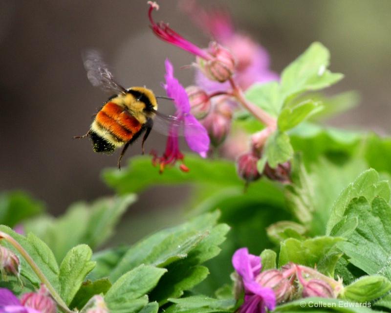 Pollen in Action