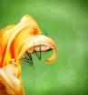 A Bug's Life ...