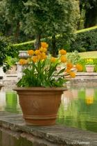 Flowers at the Villa de'Este, Italy